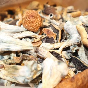 buy magic mushrooms canada